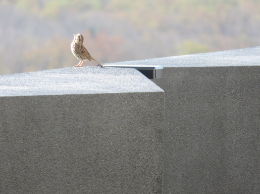 Sparrow and Stone by Lucy Tyrrell_IMG_3186.jpg