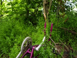 Bicycle Remains