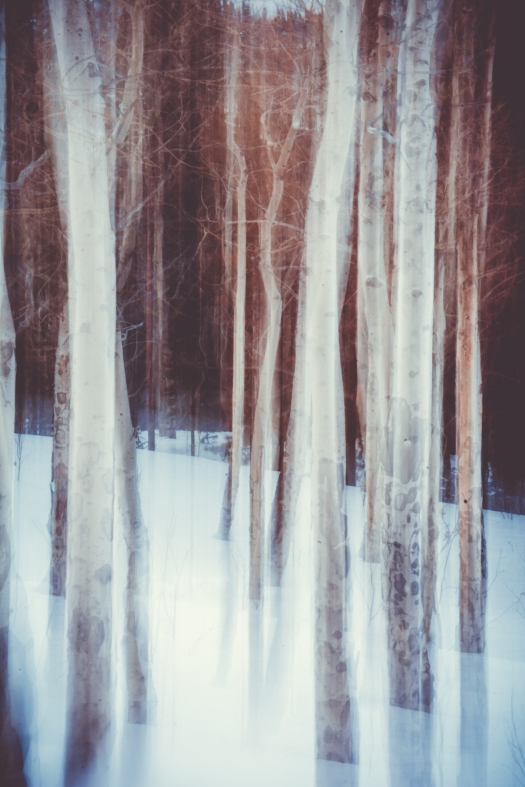 Birch Trees in Winter by Matthew Gruchow